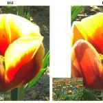 Isocell podrá mejorar la calidad de las fotos en teléfonos Samsung